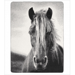 Deka s koňom