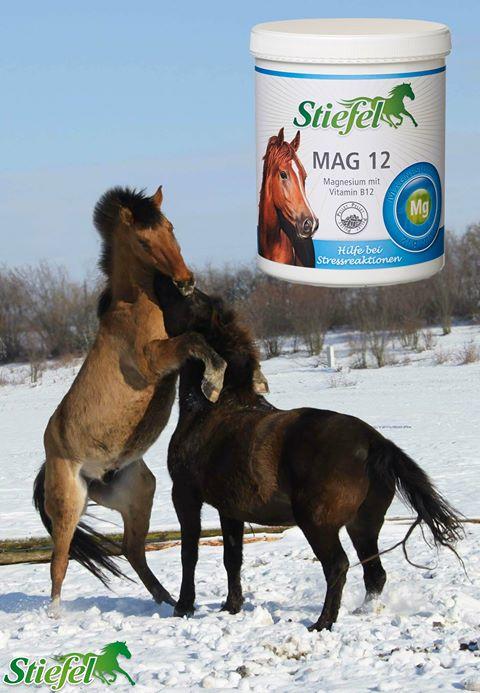 Horčík pre kone